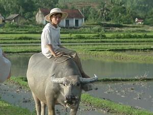 vietnamlarge035